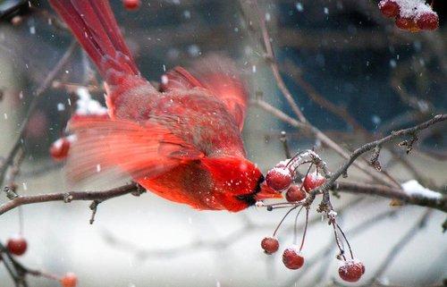 Birdscaping_2.jpeg