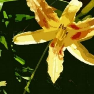 daylily.jpg