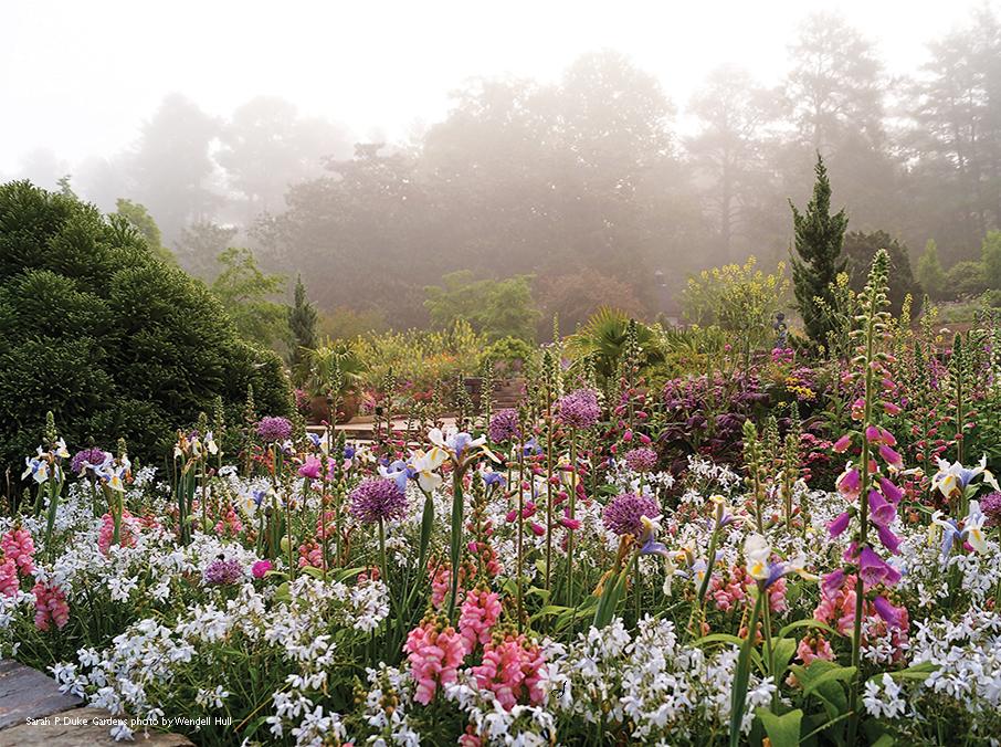 Terrace-Gardens-Duke_WH.JPG