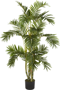Bamboo-Palm.png