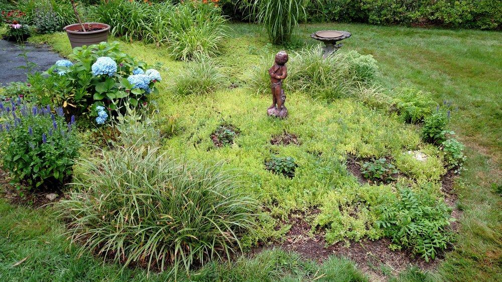 7-20-18 Shapiro Garden 7.jpg