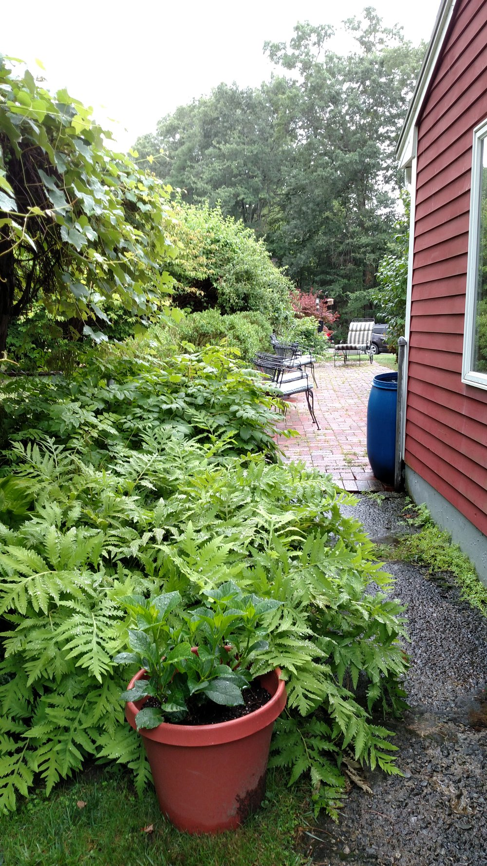 7-20-18 Shapiro Garden 13.jpg