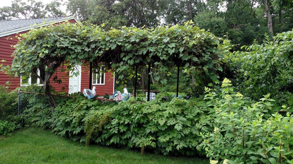 7-20-18 Shapiro Garden 15.jpg