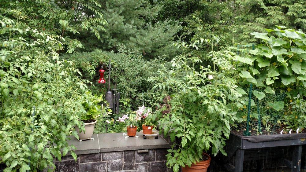 7-23-18 Singhal Garden (116).jpg