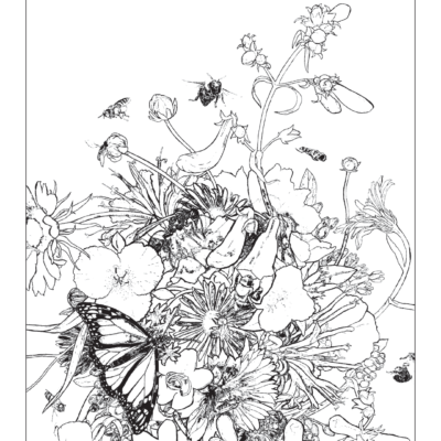 Coloring Contest!   Click here to download the coloring page and enter our coloring contest!   The Winner will receive a Pollinator-themed Goodie Bag.