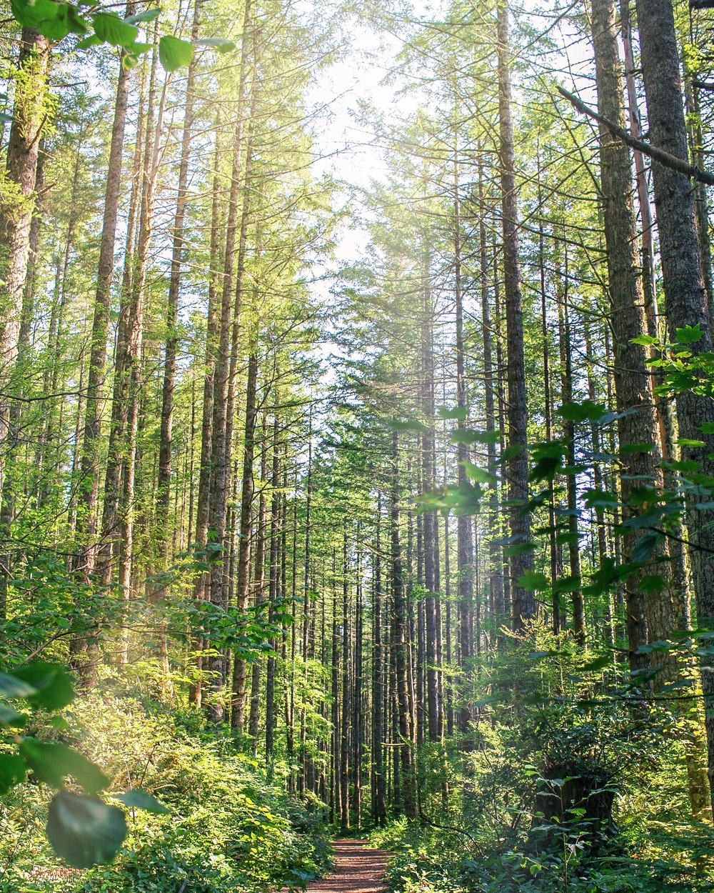 Trees during the Rattlesnake Ledge/Lake hike in Seattle