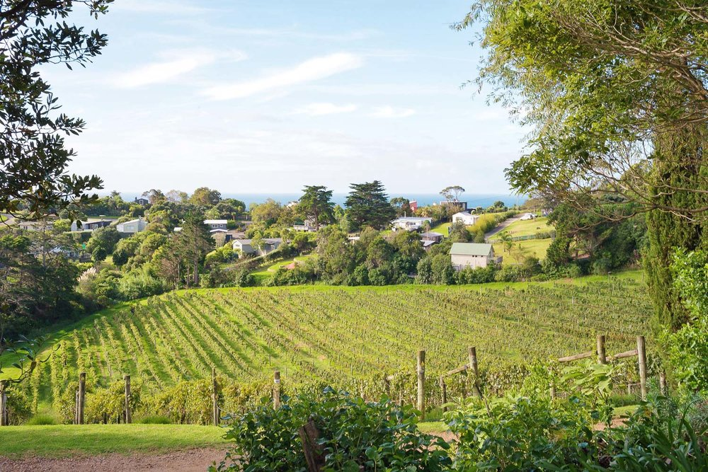 The sun-soaked vineyards at Casita Miro on Waiheke Island