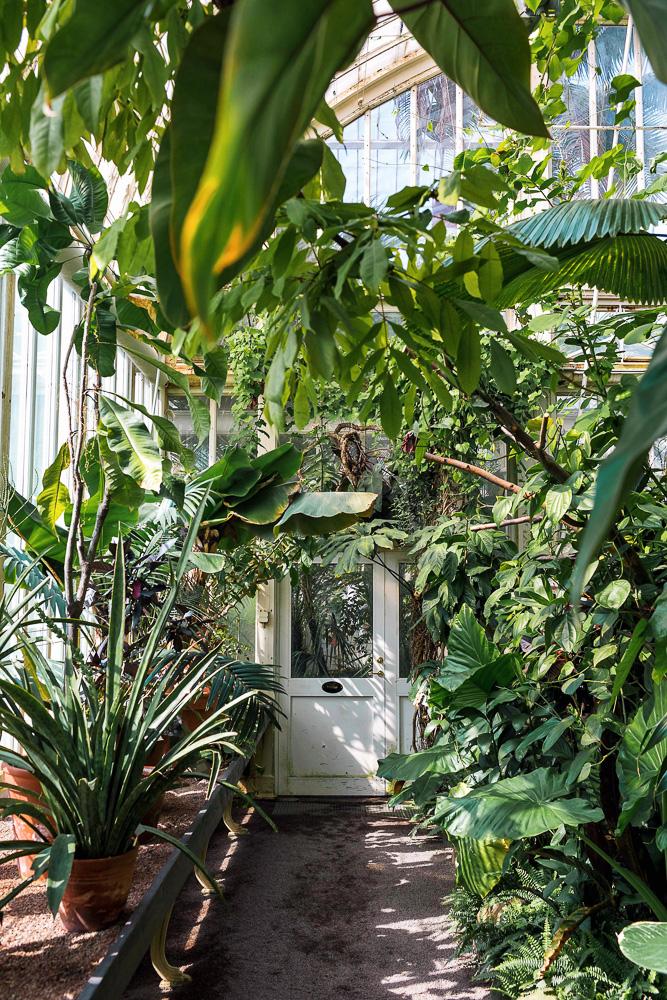The most Instagrammable place in Gothenburg - the Palm House at Garden Society of Gothenburg (Trädgårdsföreningen)