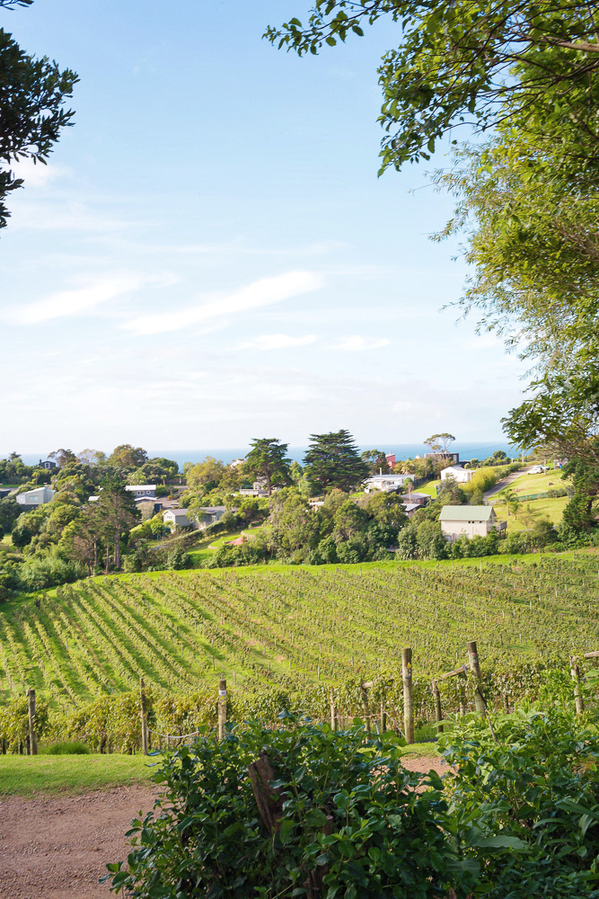 Where to go in New Zealand? Waiheke Island for wine tasting!