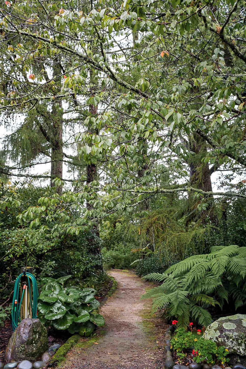 If you are planning to hike the Tongariro Alpine Crossing, consider staying in the woods at Creel Lodge in Turangi the night before