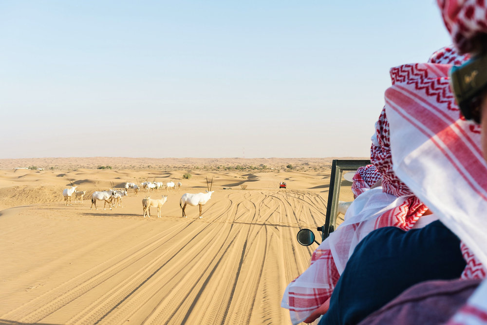 Things to do in Dubai - a desert safari