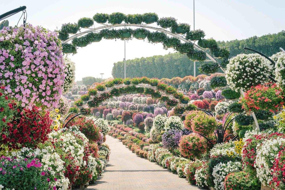A sunny day at the Dubai Miracle Garden
