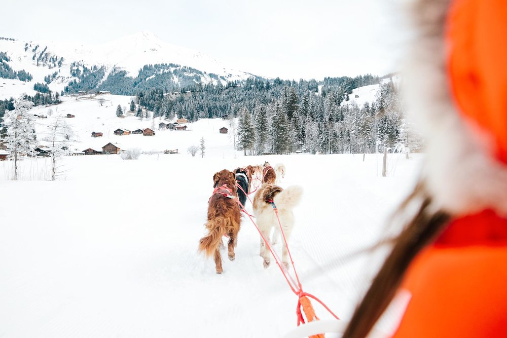 Dog sledding in Gstaad