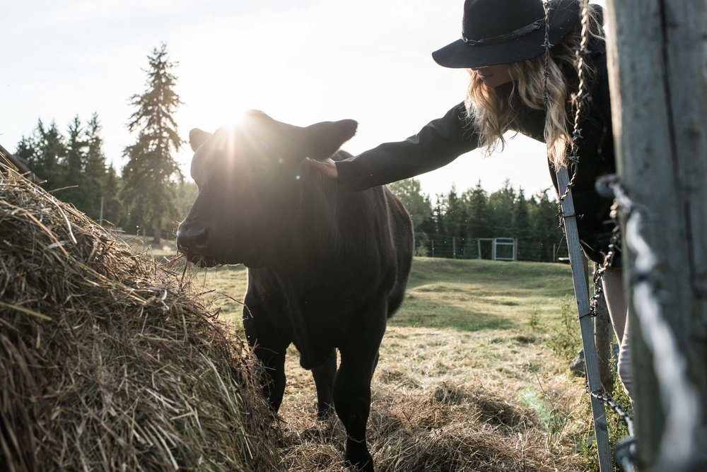 Petting a calf at Kayanara Guest Ranch & Resort in Eagle Creek. Credit: Destination BC/Blake Jorgenson