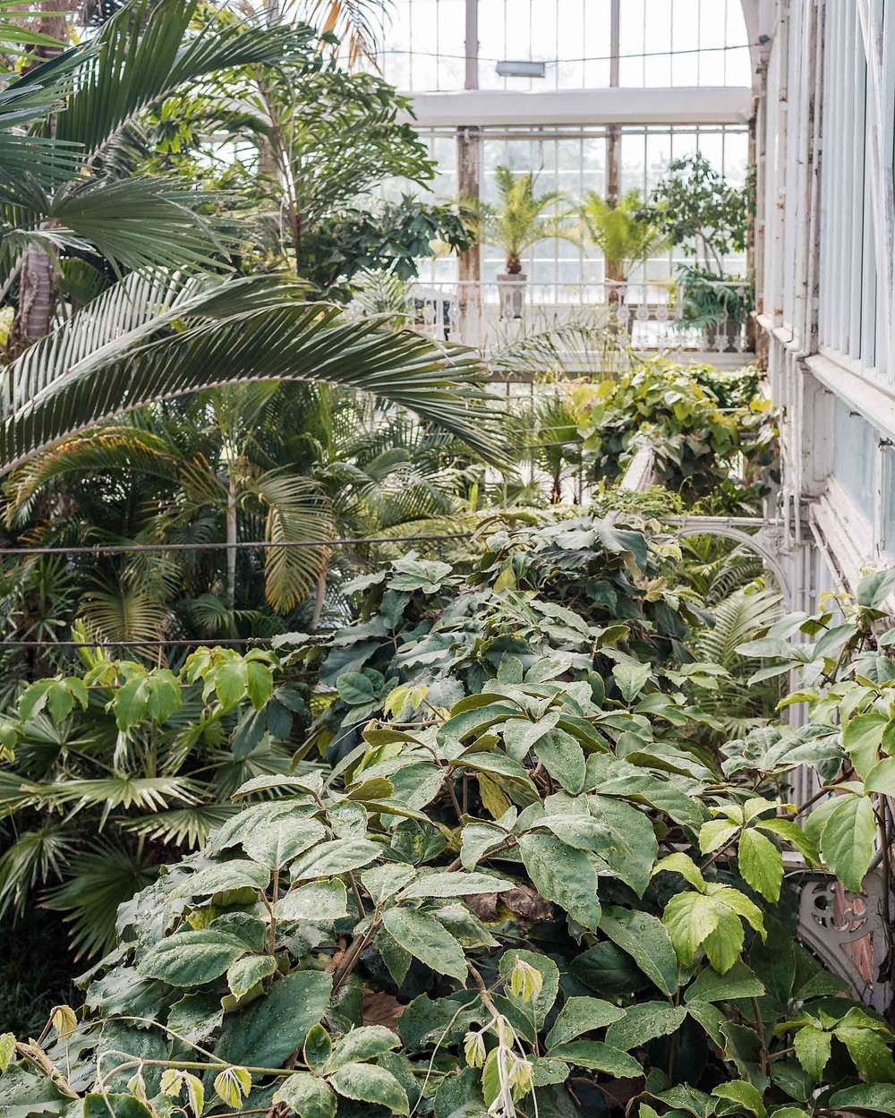 A greenhouse in Gothenburg, Sweden