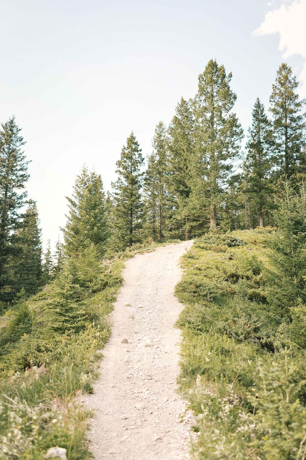 To get to the Canmore rope swing, walk just five minutes up this hill
