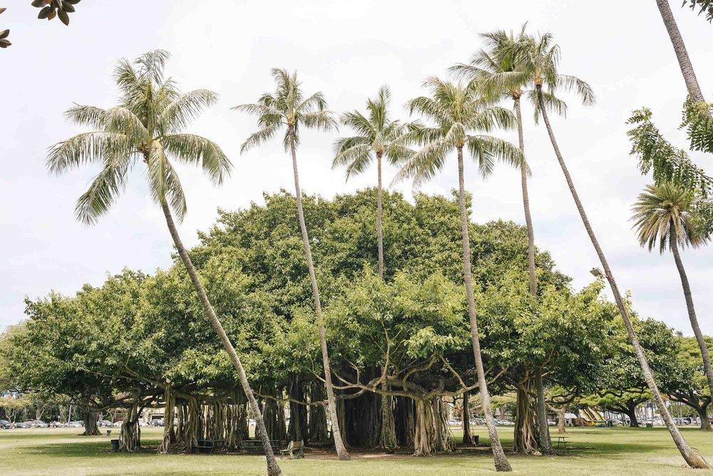 ckanani-hawaii-27.jpg