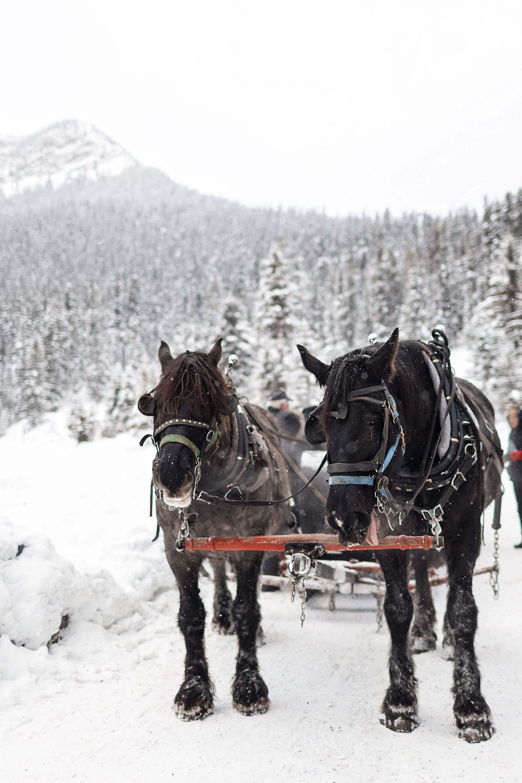ckanani-banff-winter-a-guide-to-visiting-77.jpg