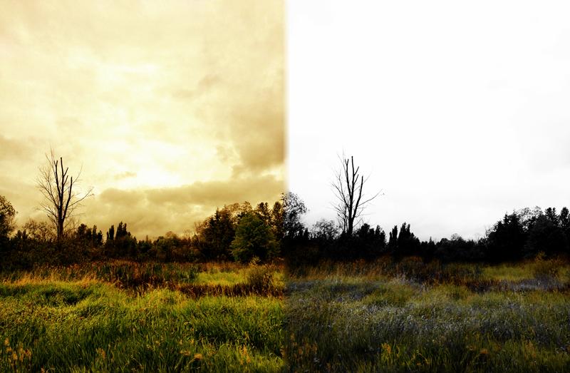 woods-john-michael-gill.jpg