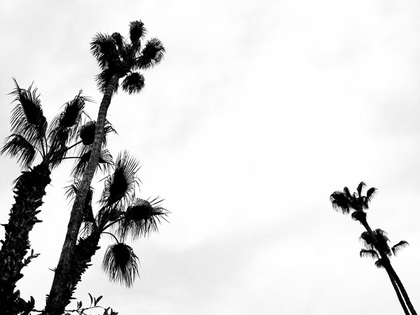 I shot this when I was in Palm Springs, California for my Cousins wedding. Palm trees have become one of many symbolic links to home.