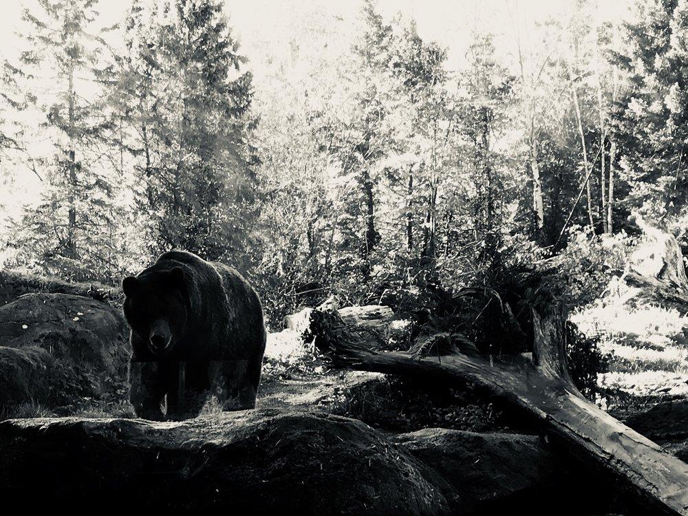 """""""Bear"""" John Michael Gill 2018"""