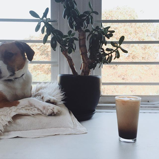 """She says if I stay veeeery still, I can try some of her cold coffee!"" 🌬☕️🐶 It's the second day of serious sunshine here and we've got the whole day ahead of us. What's everyone's plans for today? 💛 This morning I've been browsing beautiful hashtags, inspired by @me_and_orla's new hashtag collection; Click on the comments if you want to see some of them, or even better, subscribe to Sara's newsletter for her monthly suggestions."