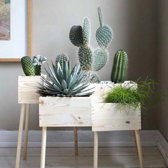 Cactus y Suculentas - Seguro que como a nosotras les encantan estas plantas, de poco cuidado, fácil mantenimiento y están a gusto en casi cualquier lugar de la casa.