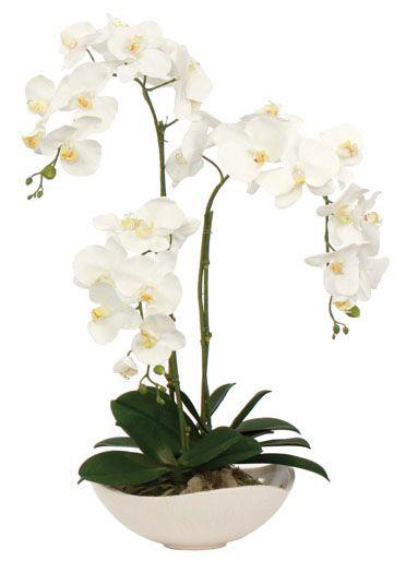 Orquídeas - Y quien no se enamora al rodearse de estas hermosas plantas, con sus flores tan parecidas a nosotras las mujeres, llenan de energía positiva cualquier ambiente.