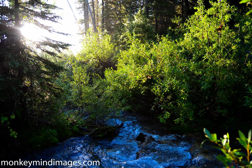 Good morning from Steep Creek.