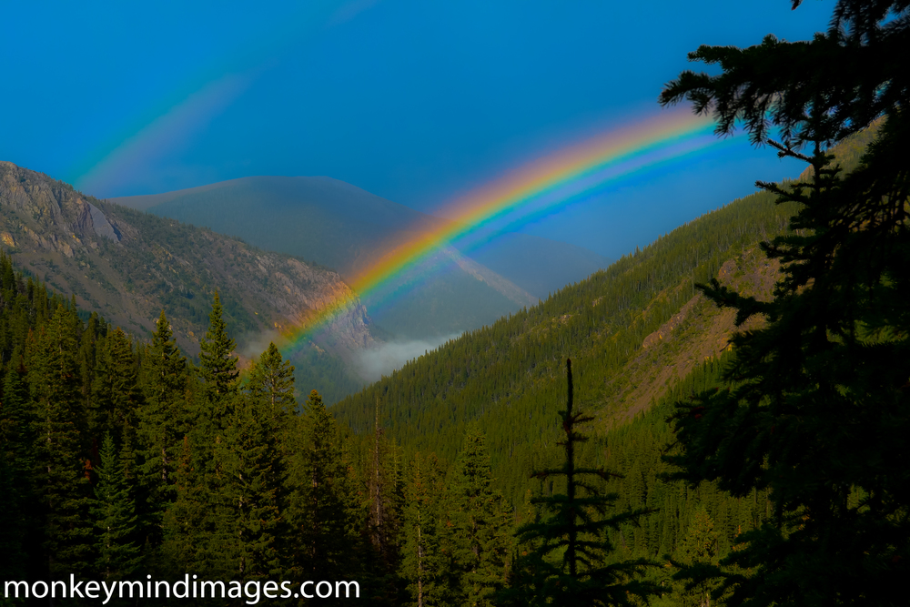 Sometimes backpacking in the rain comes with big benefits. From the Strawberry Creek Trail...