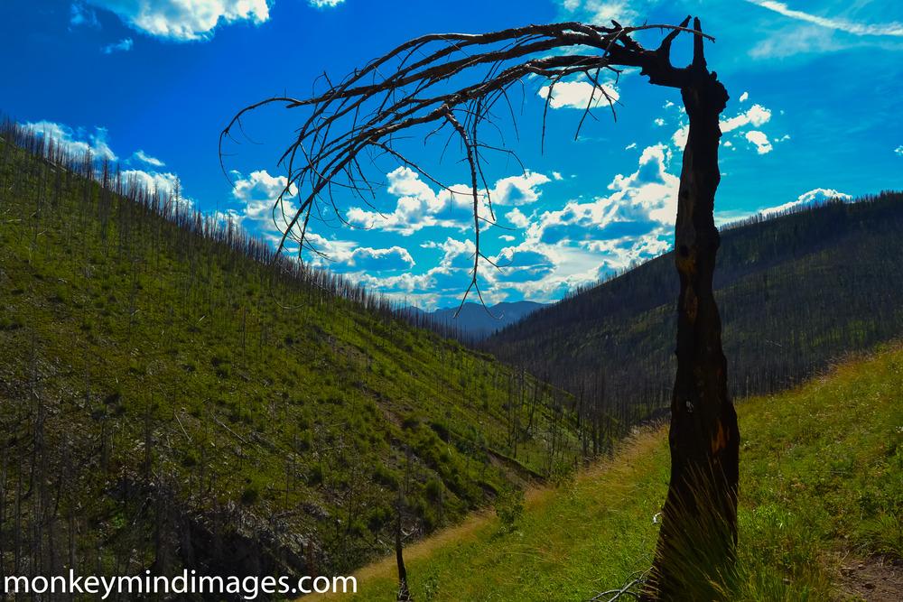 """Scythe"". On the Gateway Gorge Trail..."