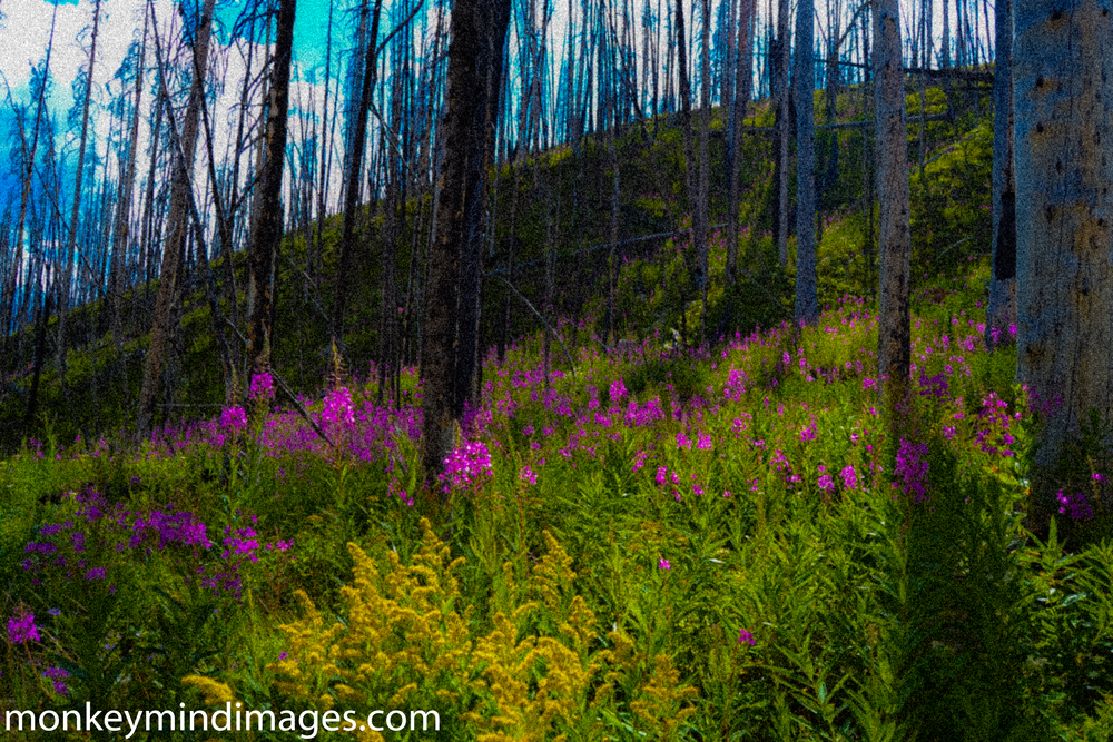 After the fire. Death's lesson is live. Gateway Gorge Trail...
