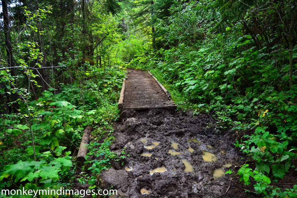 As a backpacker, I'm not a fan of horse traffic in the wilderness. Those brutes carve up the trail. When it rains, you get dastardly mud bogs like this. And the bogs dry and create hiking moguls. Very tough on the legs and feet. I have no issue with the Forest Service using pack animals to do their work. It's all the outfitters taking people out into the woods that are the problem. Backpackers are expected to practice zero-impact camping (and this is very good). But these outfitters leave scars all over the place and their animals shit all over the trails and campsites. Yeah, not a fan.