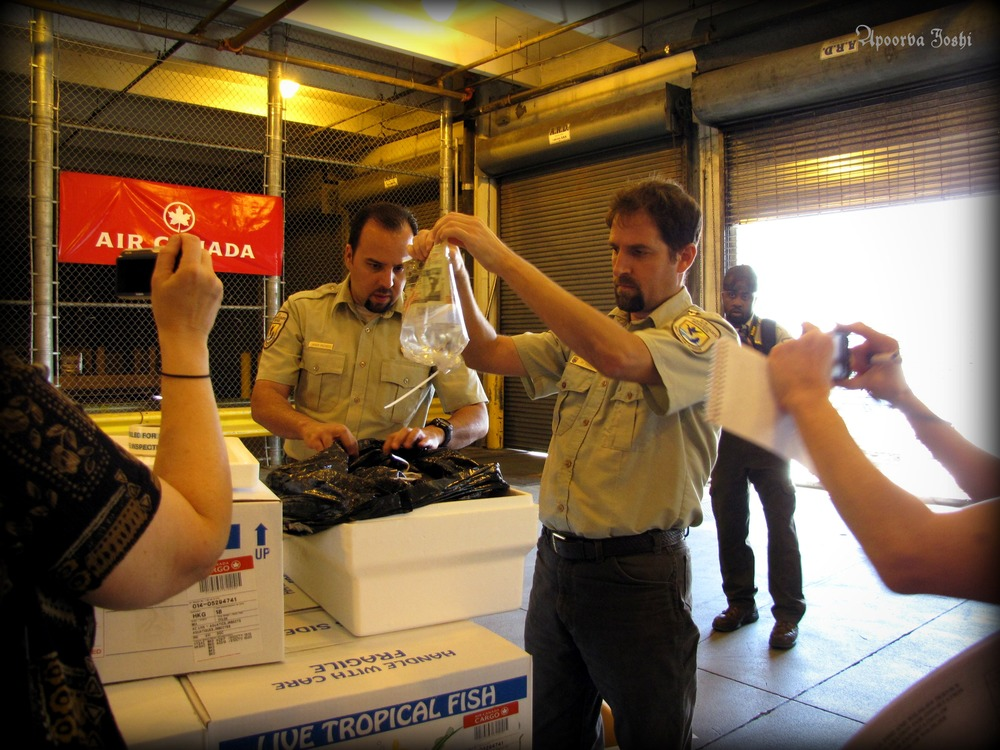 Miami Fish and Wildlife Service officials inspect a shipment of live wild flora and fauna to look for any irregularities or illegal shipments. Illegal wildlife trade is the fourth most profitable trade in the world said to be worth almost $20 billion annually.