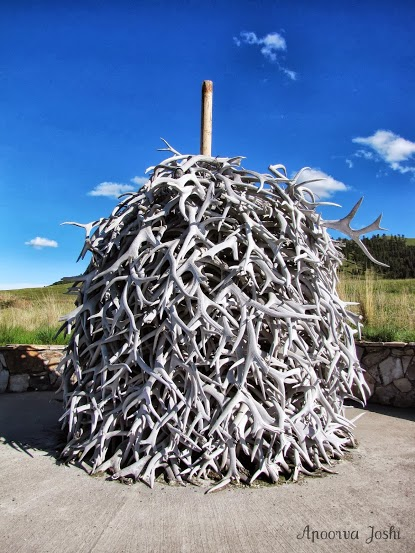 A pile of shed antlers at the National Bison Range in Montana.