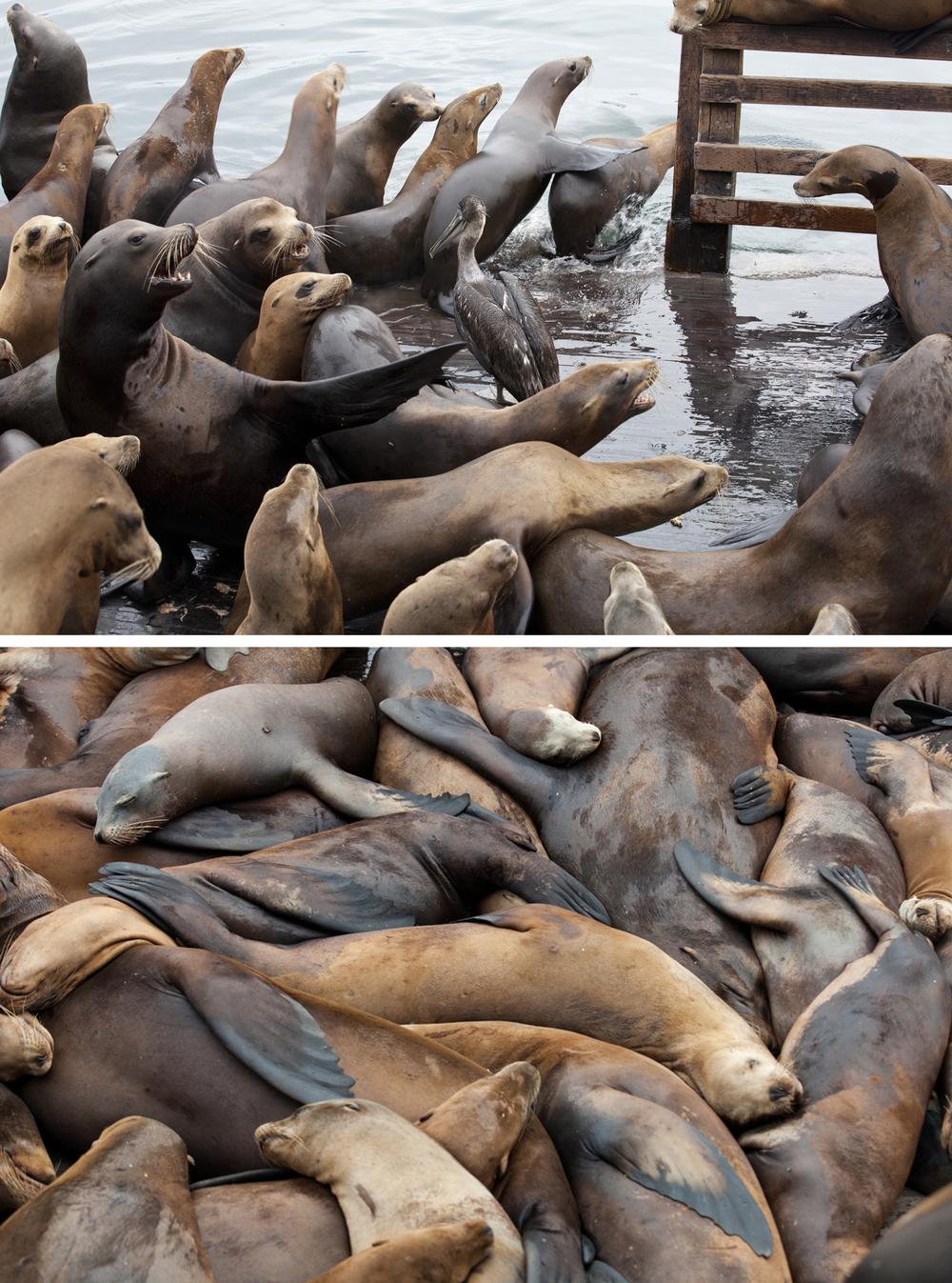 17_sea lions.jpg