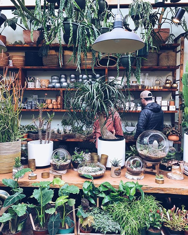 #pistilsnursery Had the best collection of planters and plants! Perfect stop for a quick gift in #pdx 🌿🌾🌵🌱☘️🌷🌼 #mondaymusings
