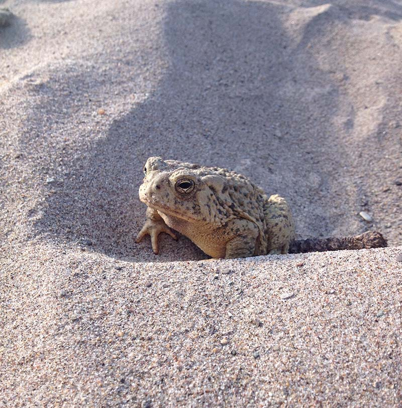 toad friend.jpg