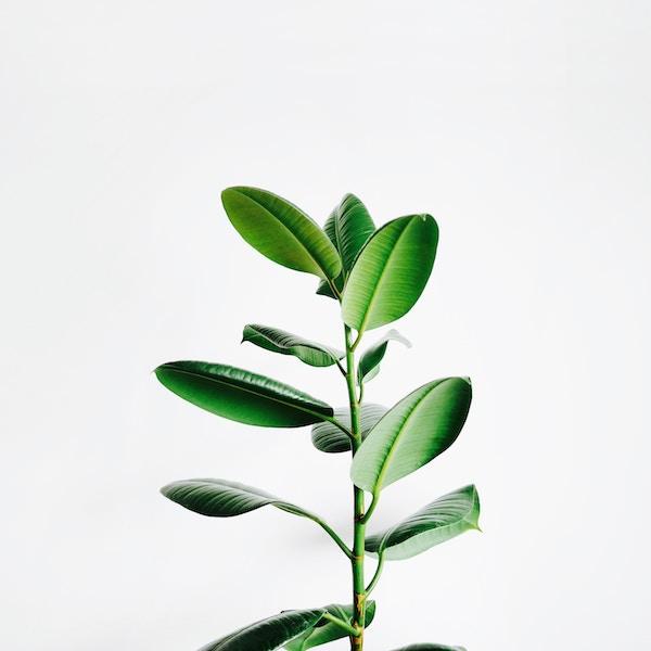 Growability - Services2.jpg