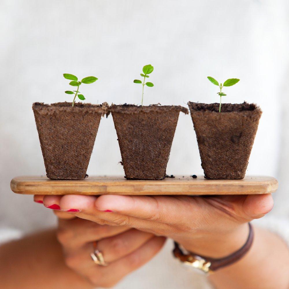 Growability - ONE30 Learning Transder