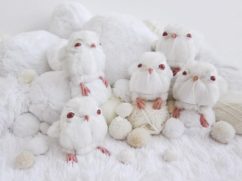 owls-jaz-harold.jpg