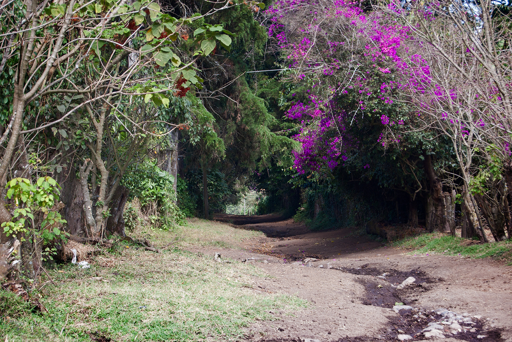 Finca Hacienda Carmona. A stroll here is 10 times more restorative than any European mud bath could ever be.