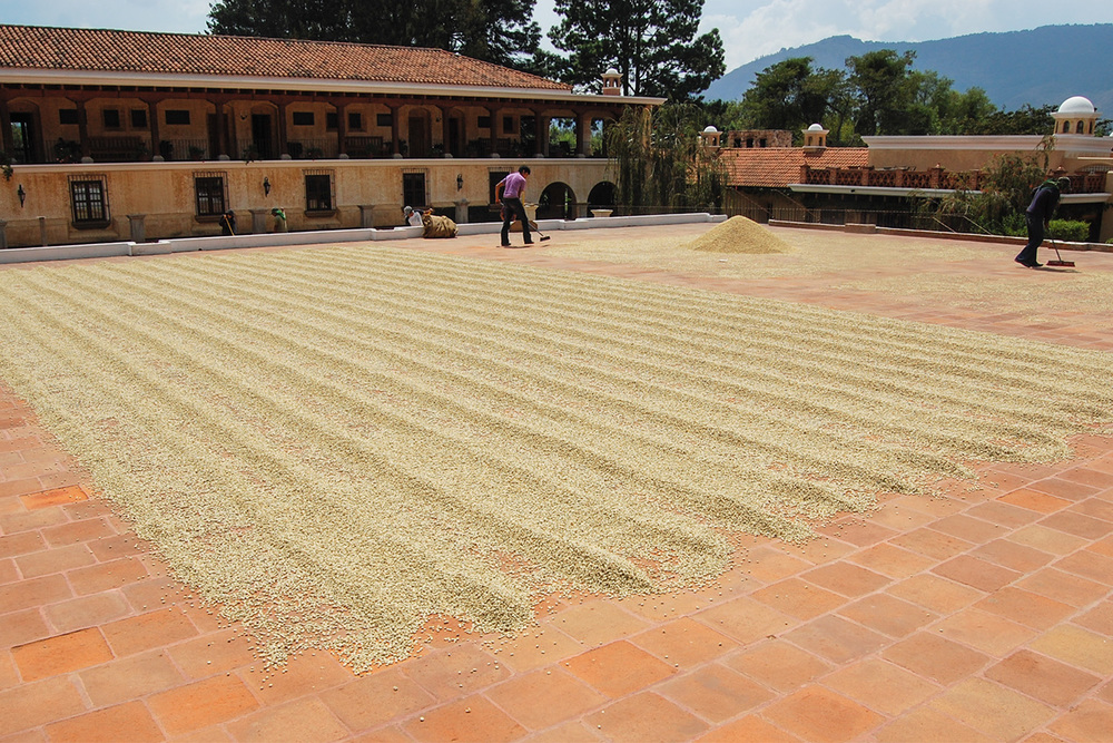 Drying patio. Beans are raked and turned by hand.
