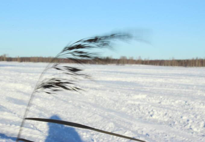 vinterdag_6.jpg