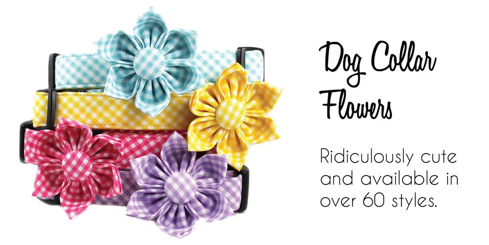 home dog collar flowers small.jpg