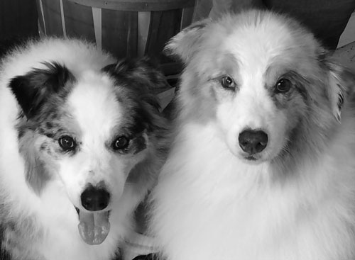 Rio & Rusty