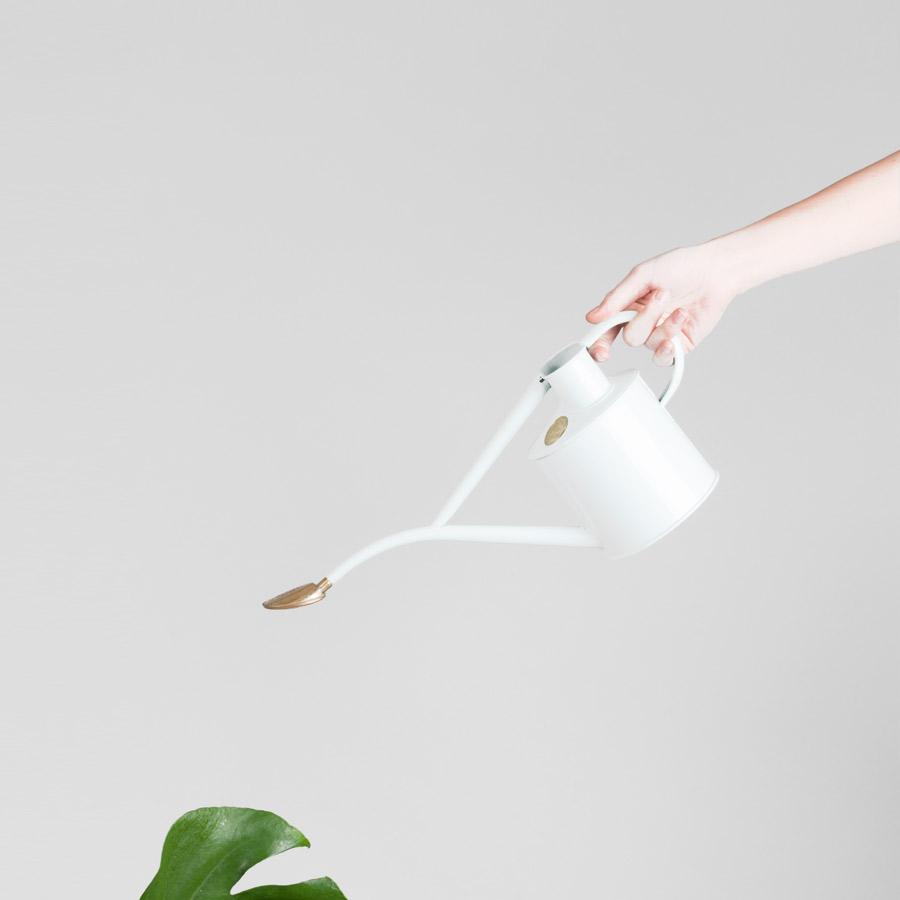 shop products u2014 emma sadie thomson est plant stylist