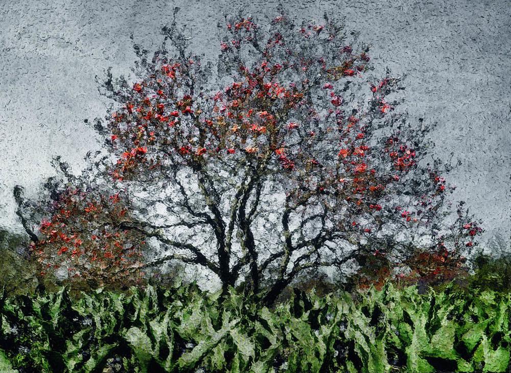 michaeleastman-forestparkforever-9.jpg