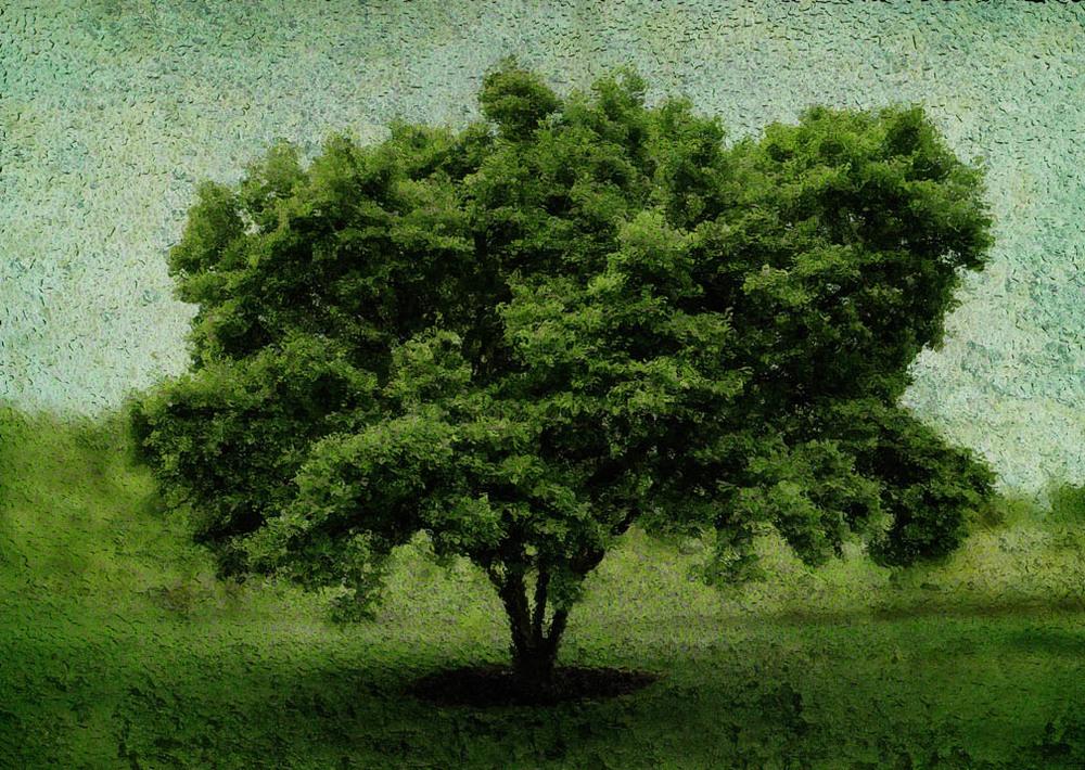 michaeleastman-forestparkforever-22.jpg