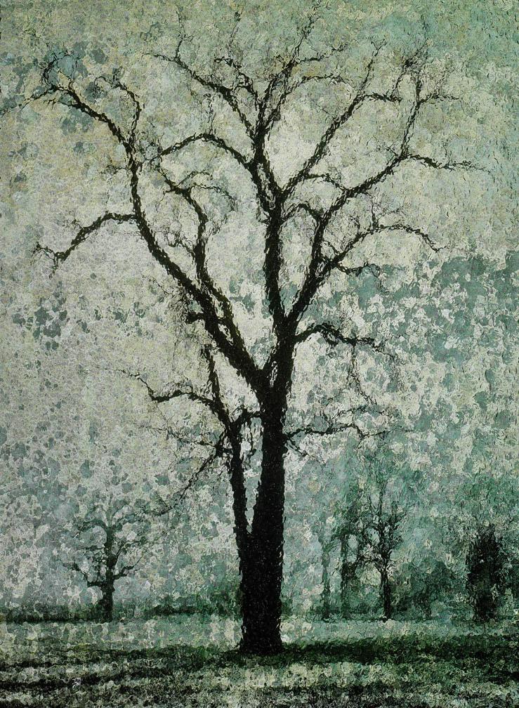 michaeleastman-forestparkforever-29.jpg